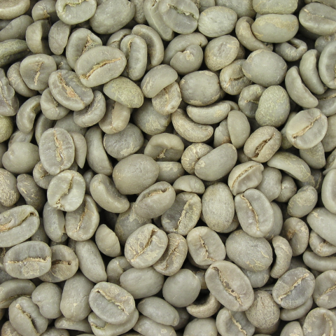 chlorogenic acid in green coffee