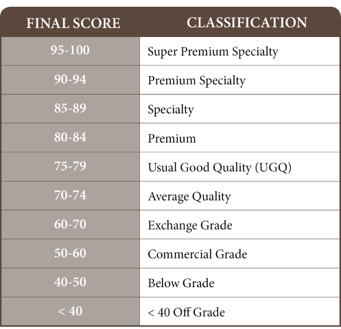 SCAA cupping final score classification